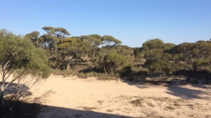 Eucla, Streaky bay and Coffin Bay 006